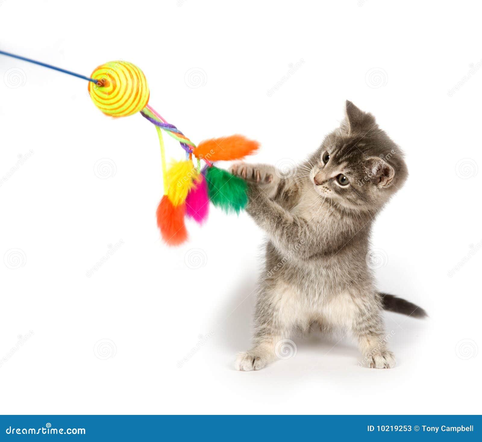 Chaton gris jouant le jouet