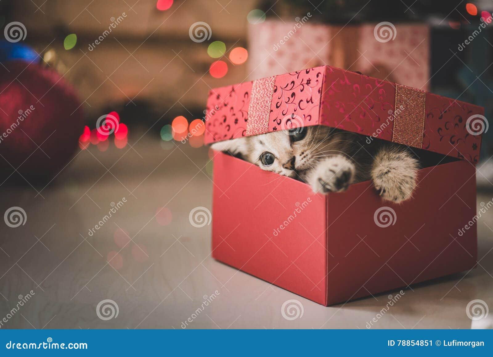 Chaton jouant dans un boîte-cadeau