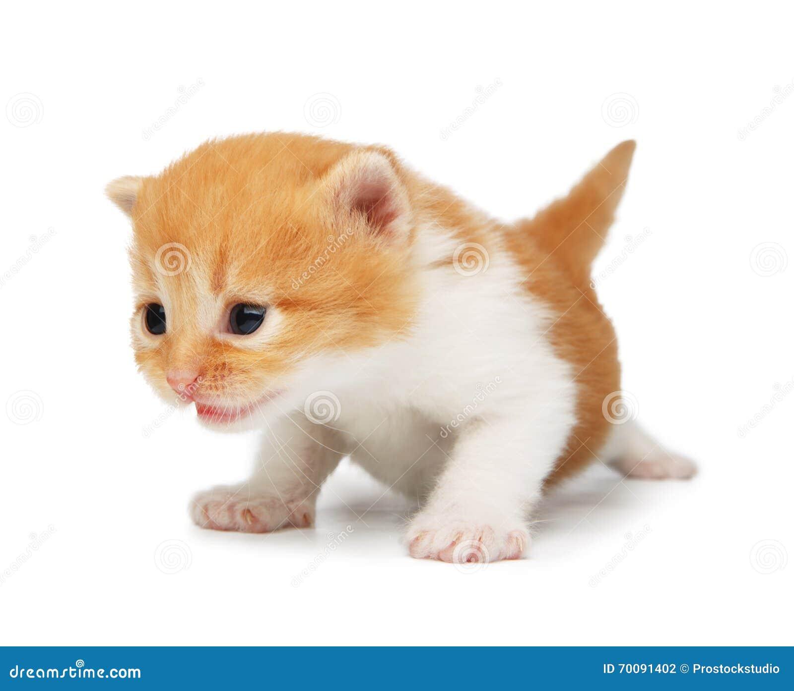 Chaton mignon de rouge orange