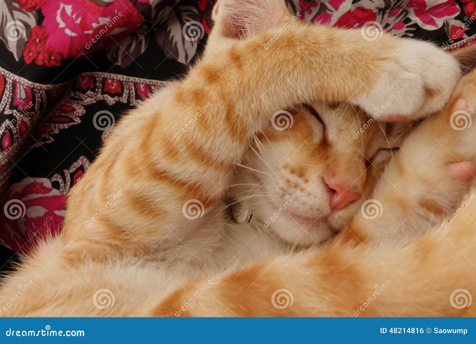 Chaton mignon de style de sommeil petit chat de b b photo stock image du doux main 48214816 - Image de petit chat ...