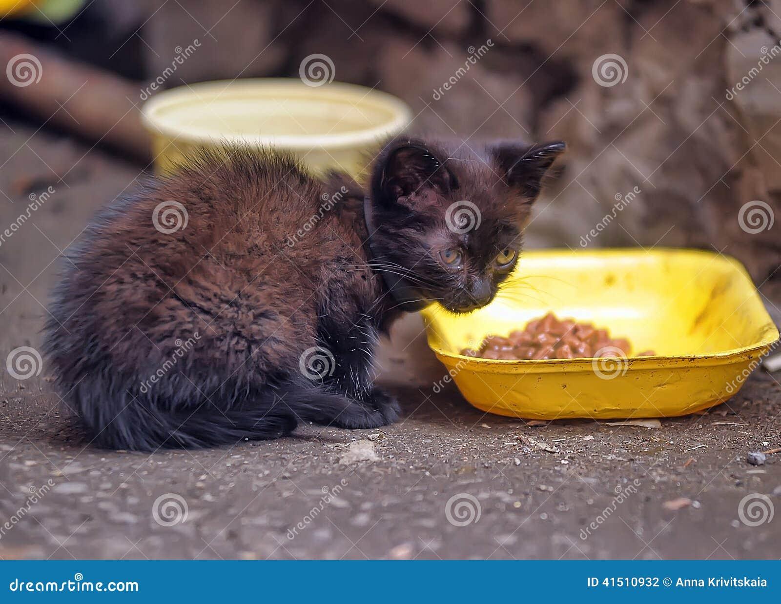 Chaton sans abri sur la rue