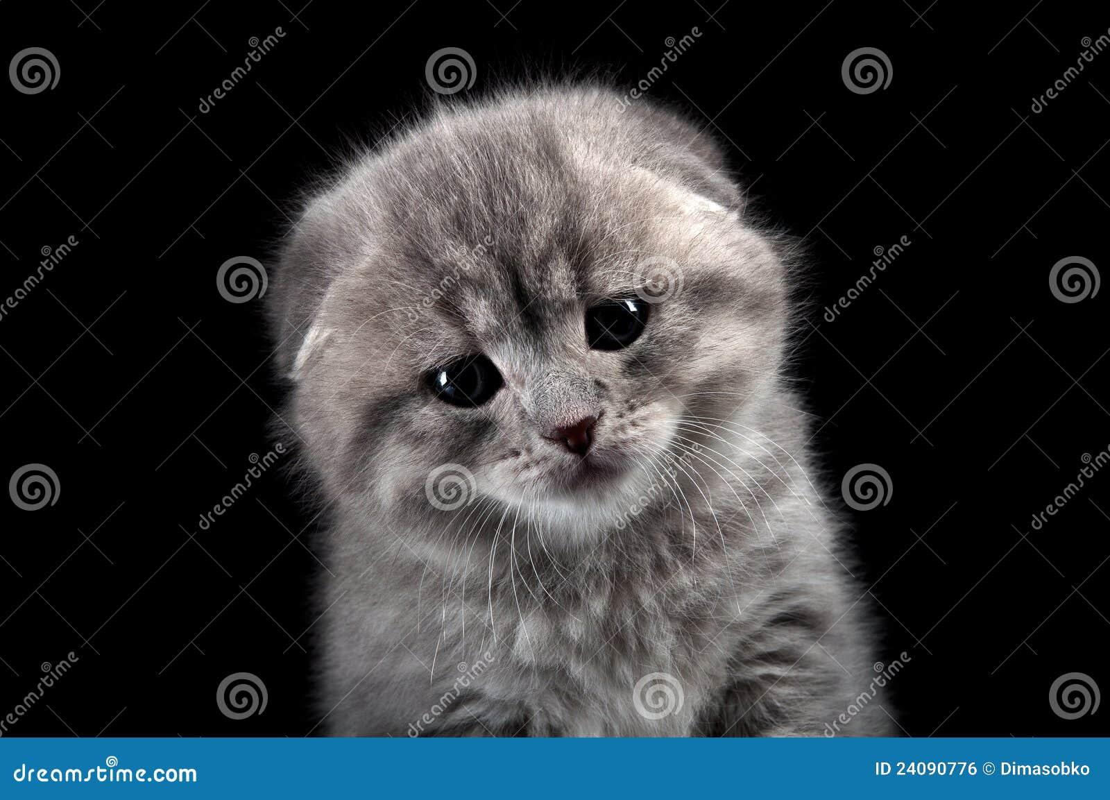 Chaton seul triste