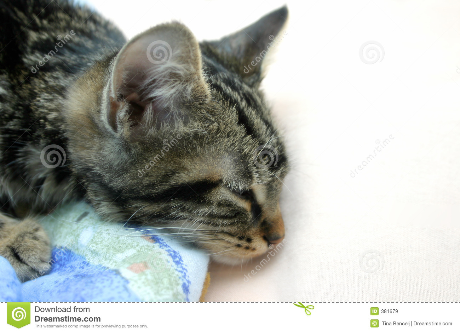 Chaton somnolent