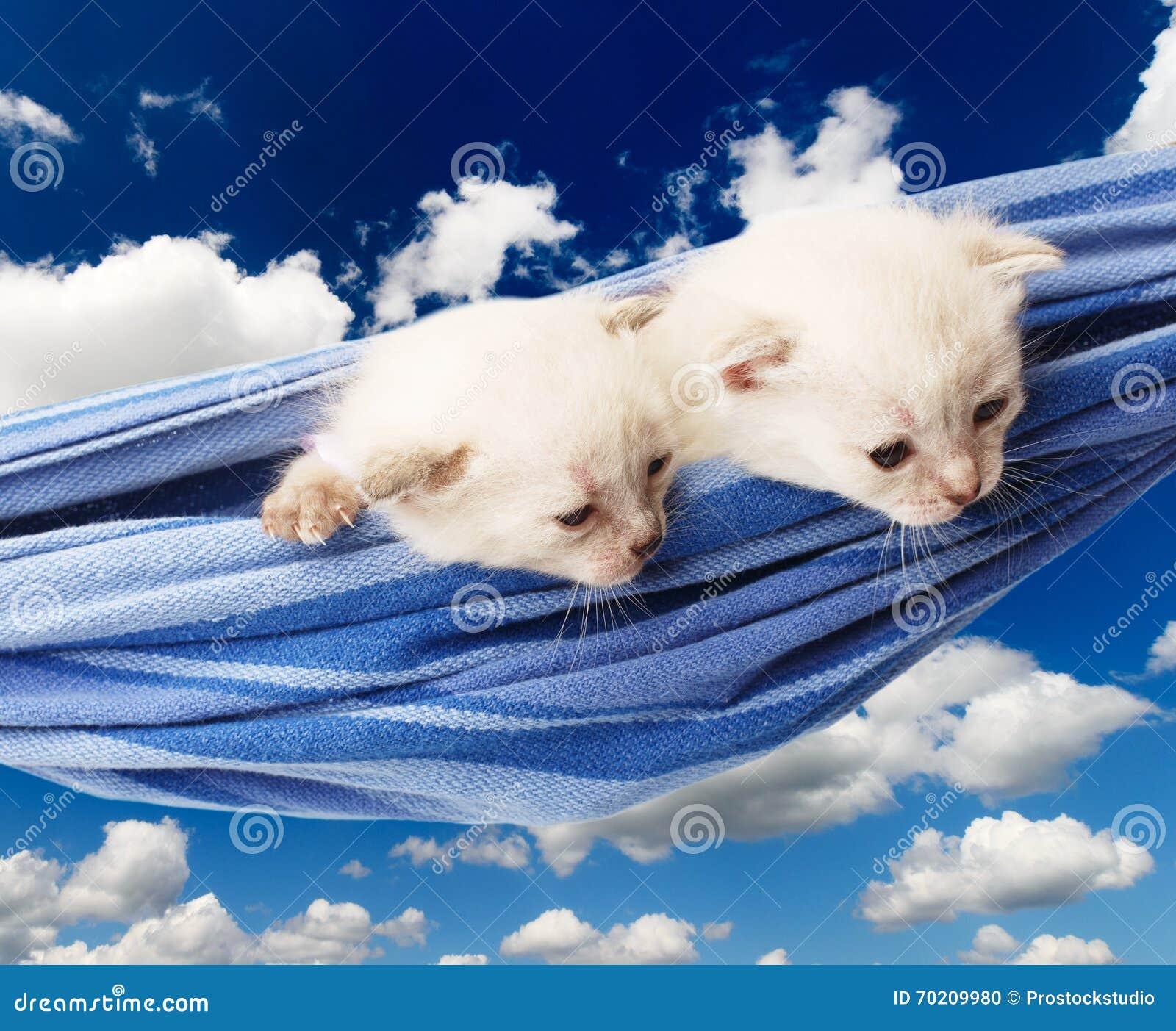 Chatons blancs mignons dans l hamac d isolement au ciel bleu