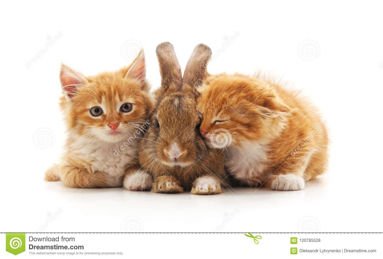 Chatons et lapin rouges