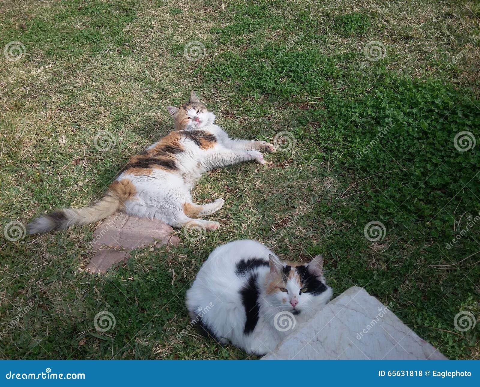 Chats de Chambre dans le jardin au jour