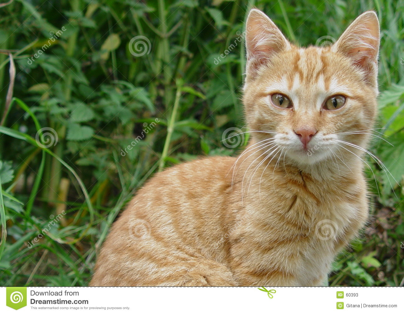 Download Chats de Wonderfull image stock. Image du animal, curieux - 60393