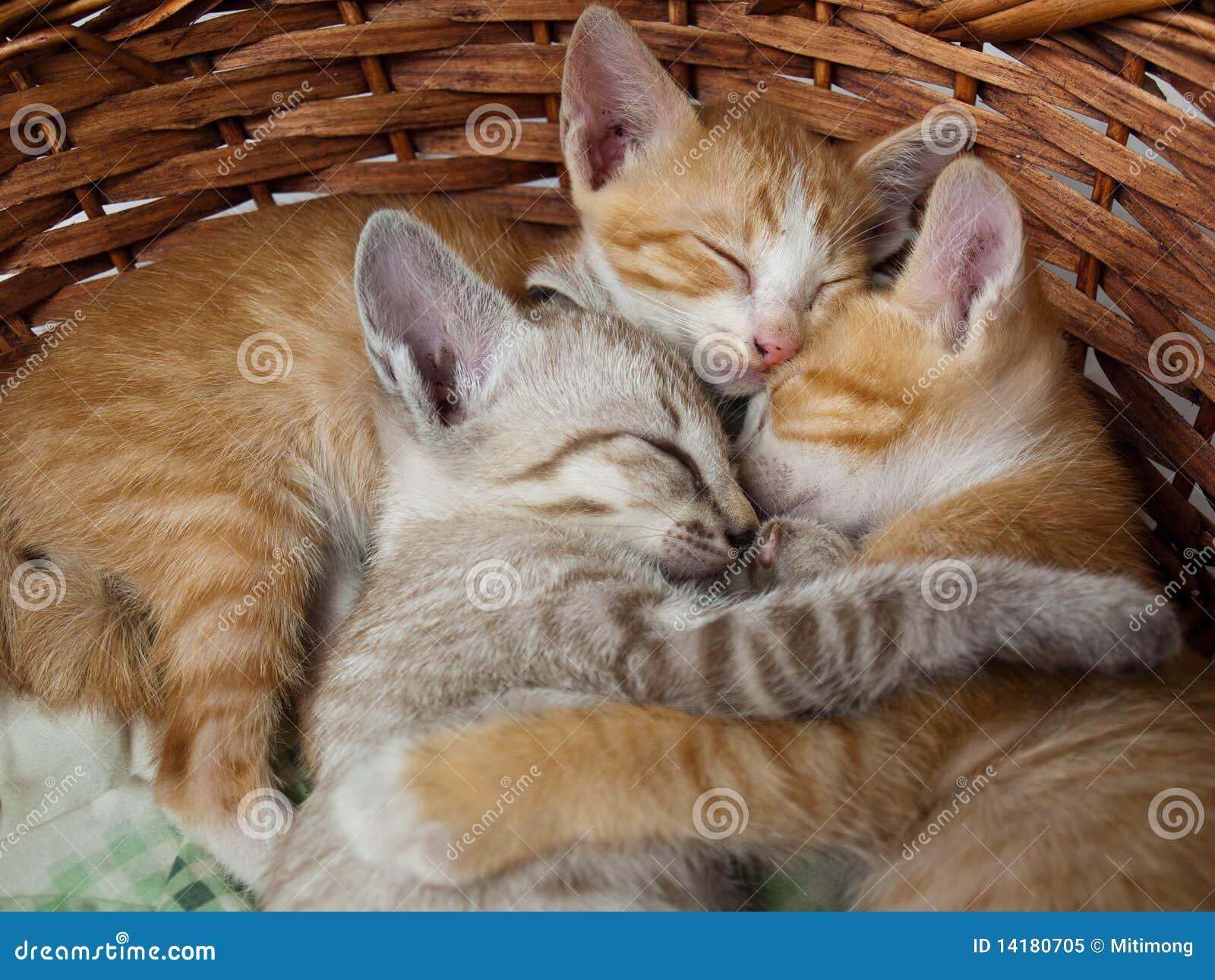 Chats dormant dans le panier