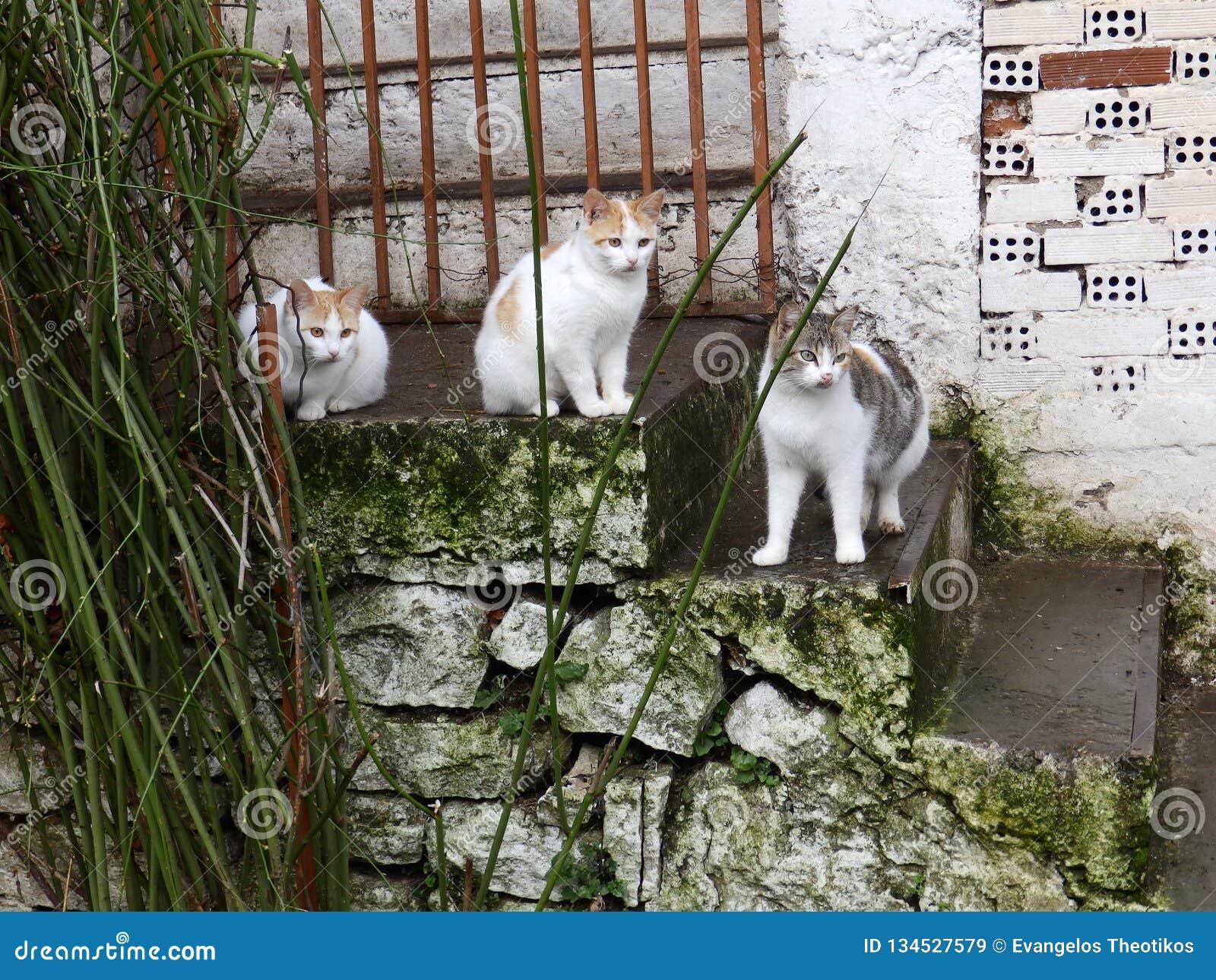 Chats paresseux et vieux escaliers