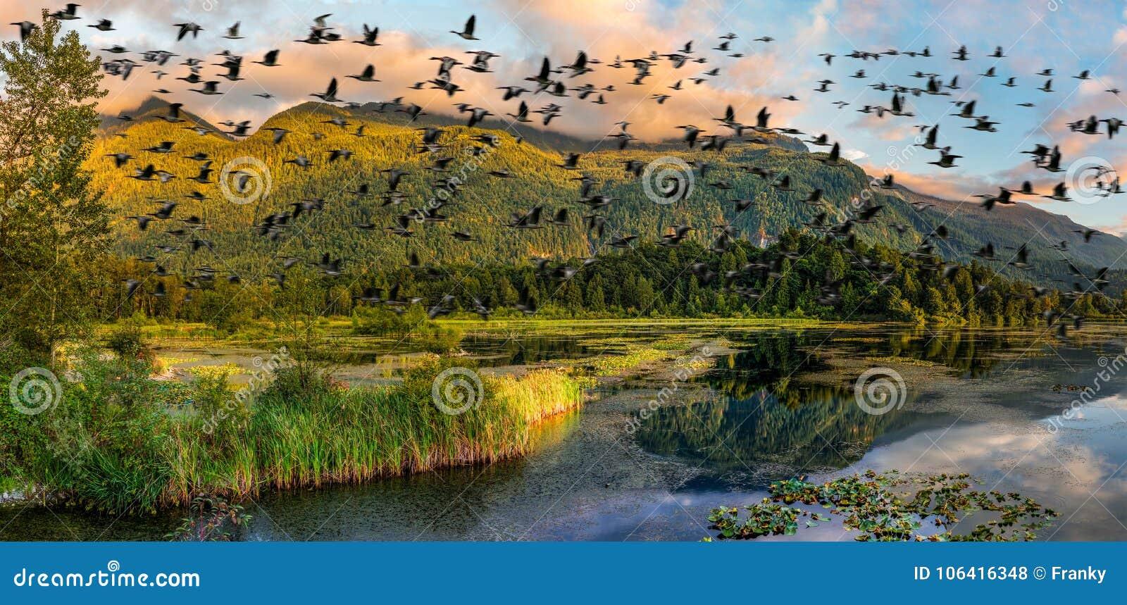 Cheam bagien regionalności Jeziorny park, Rosedale, kolumbiowie brytyjska, C