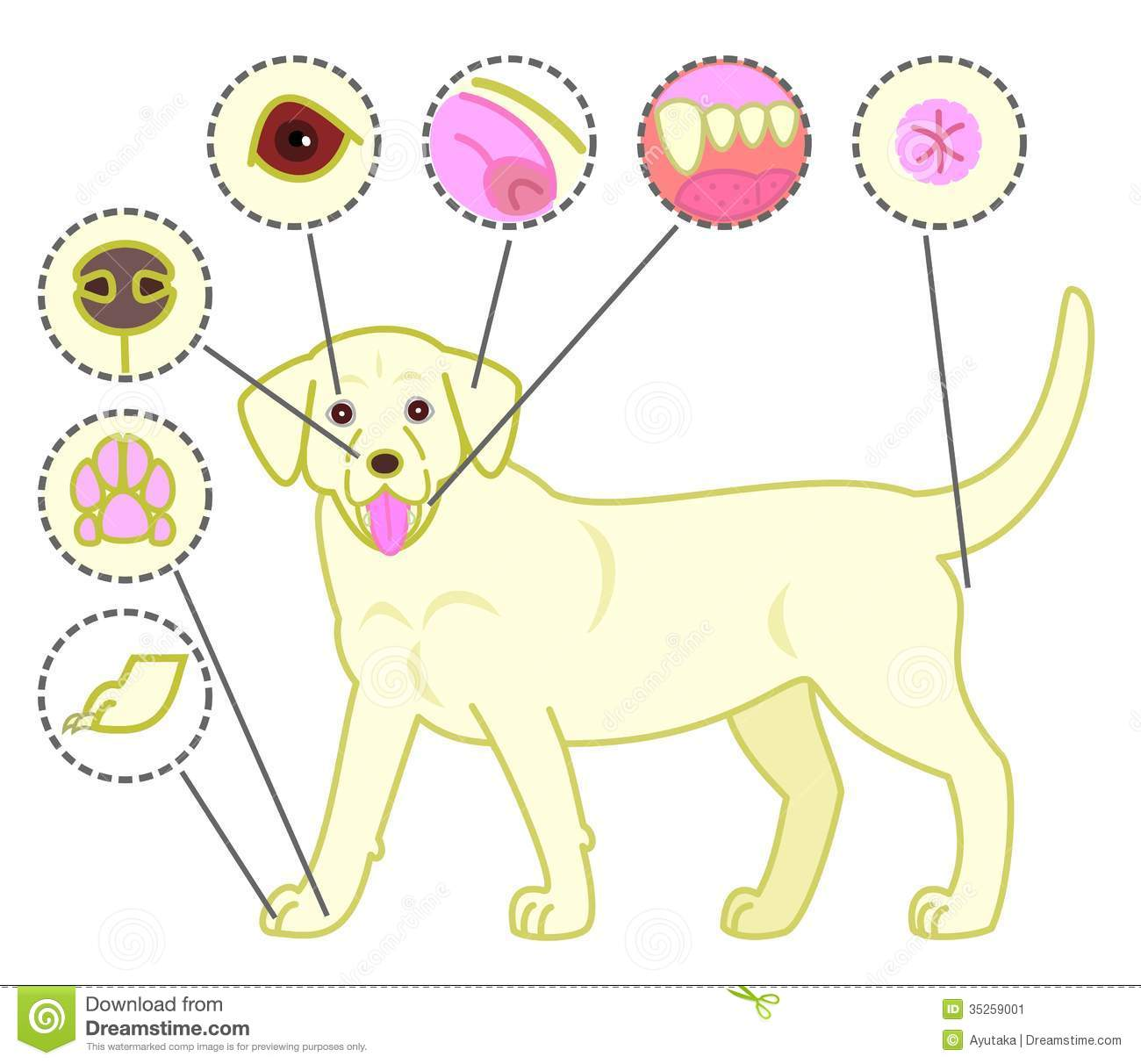 Check-points of dogs body stock vector. Image of vitality ...