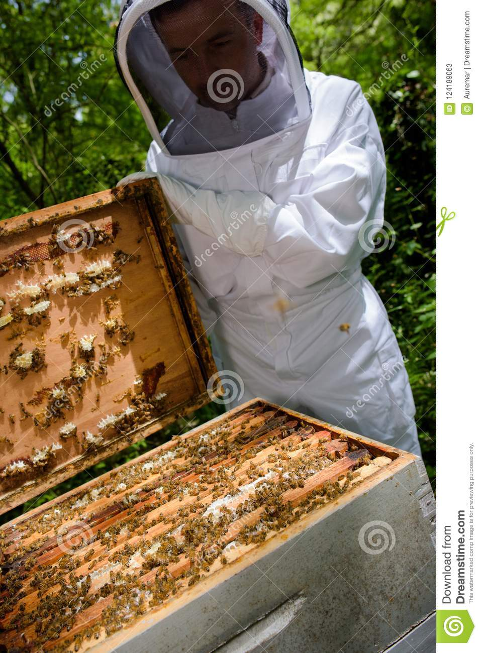 Checking the bee box