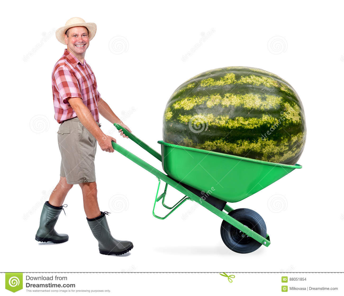 Cheerful gardener carrying a large watermelon