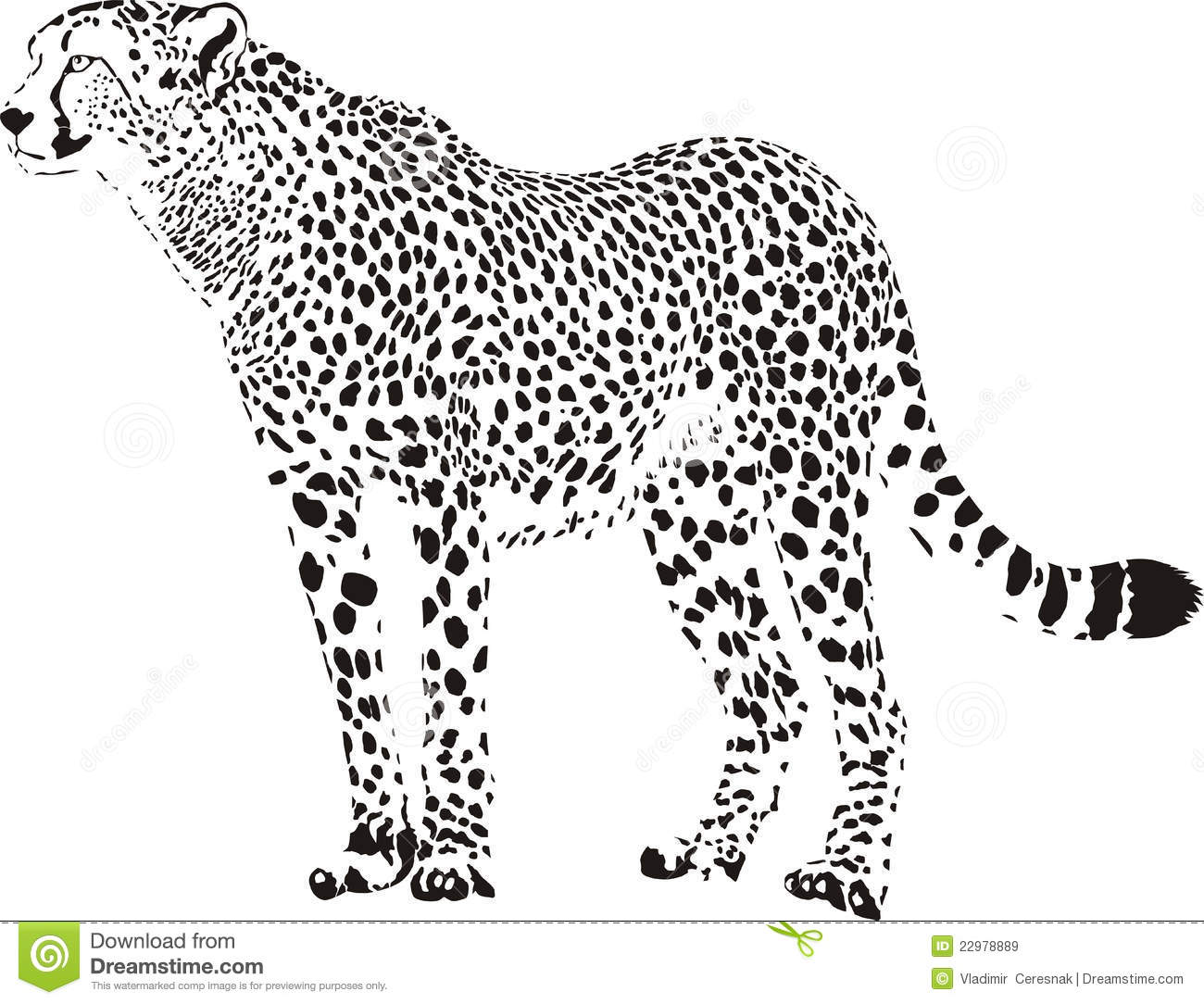 cheetah royalty free stock images image 22978889 leopard clipart pattern leopard clipart black and white