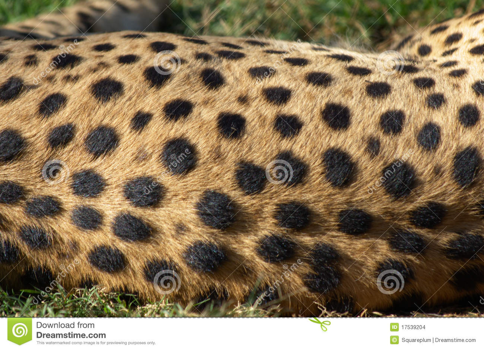 Cheetah Fur Close Up Cheetah Fur Sto...