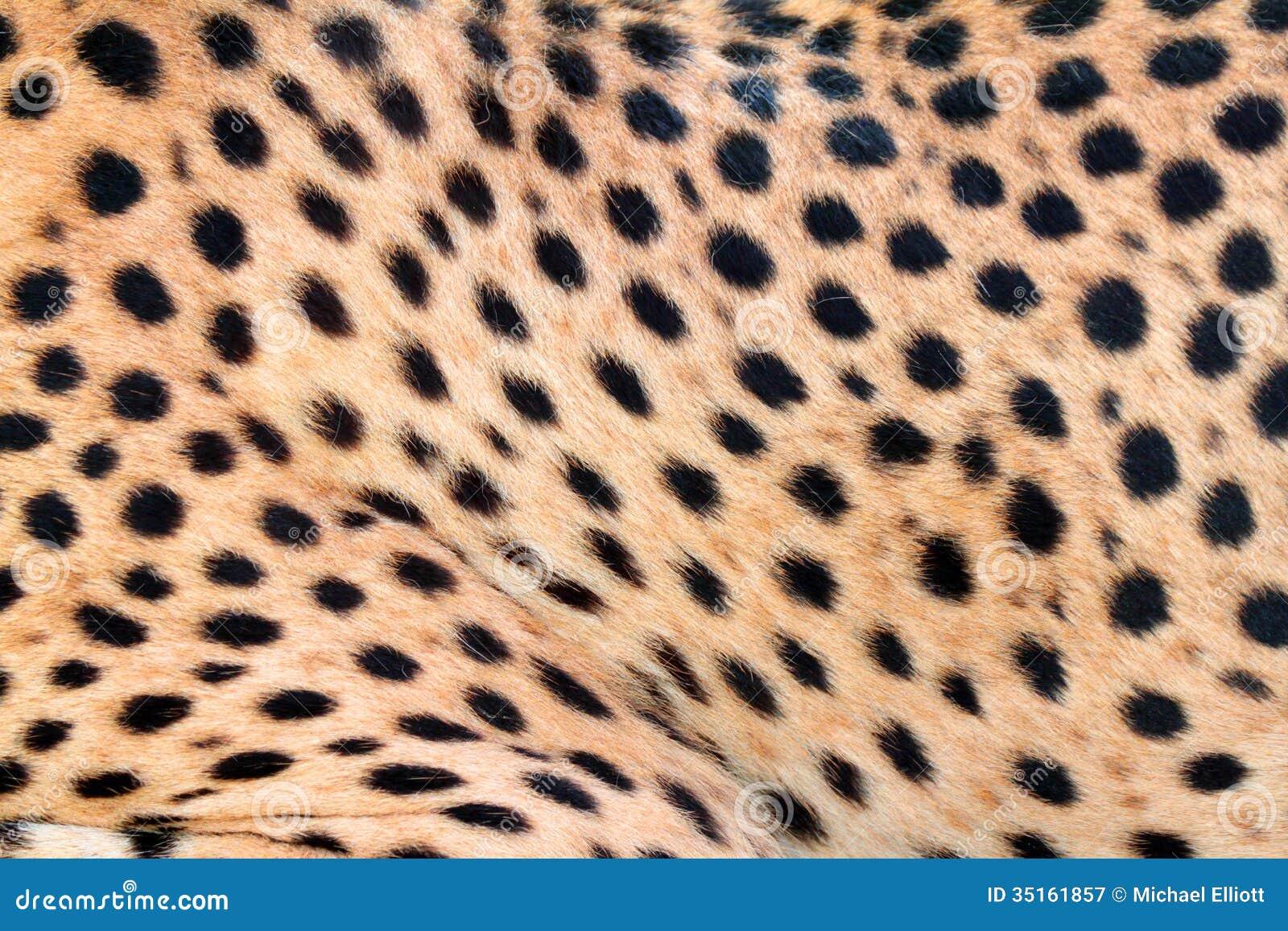 Cheetah Fur Close Up Cheetah fur