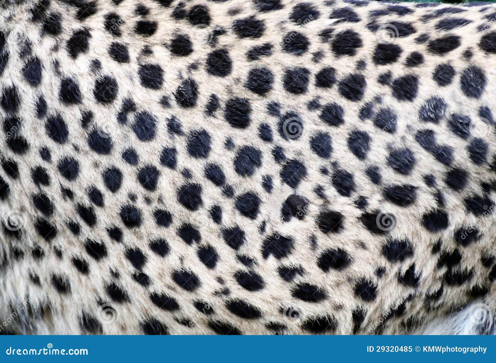 Cheetah Fur Close Up Cheetah Fur Clo...