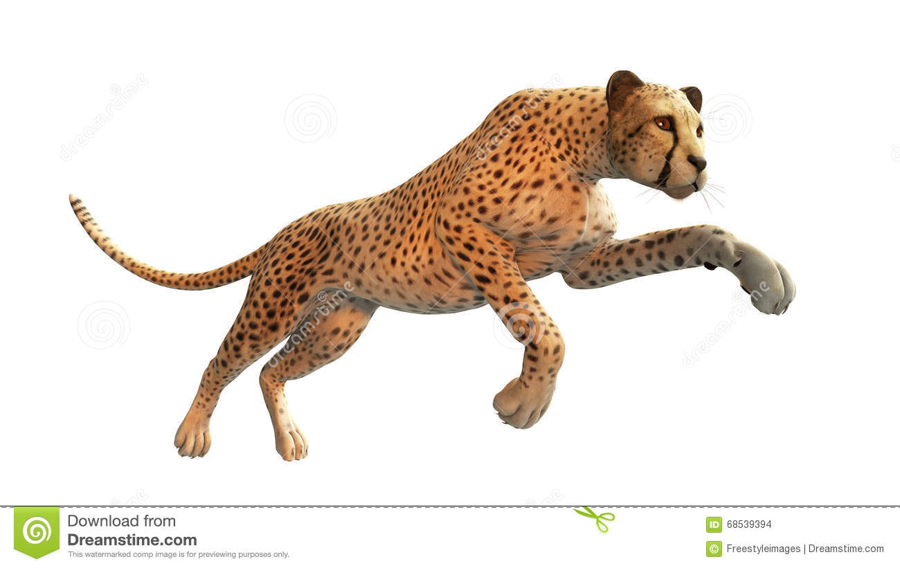 Cheetah's hunting prowess, decoded | discovermagazine. Com.