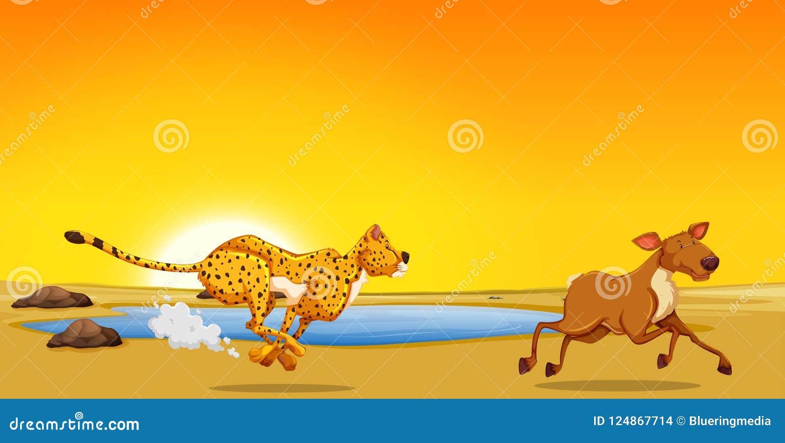 A cheetah hunting deer stock illustration. Illustration of graphic.