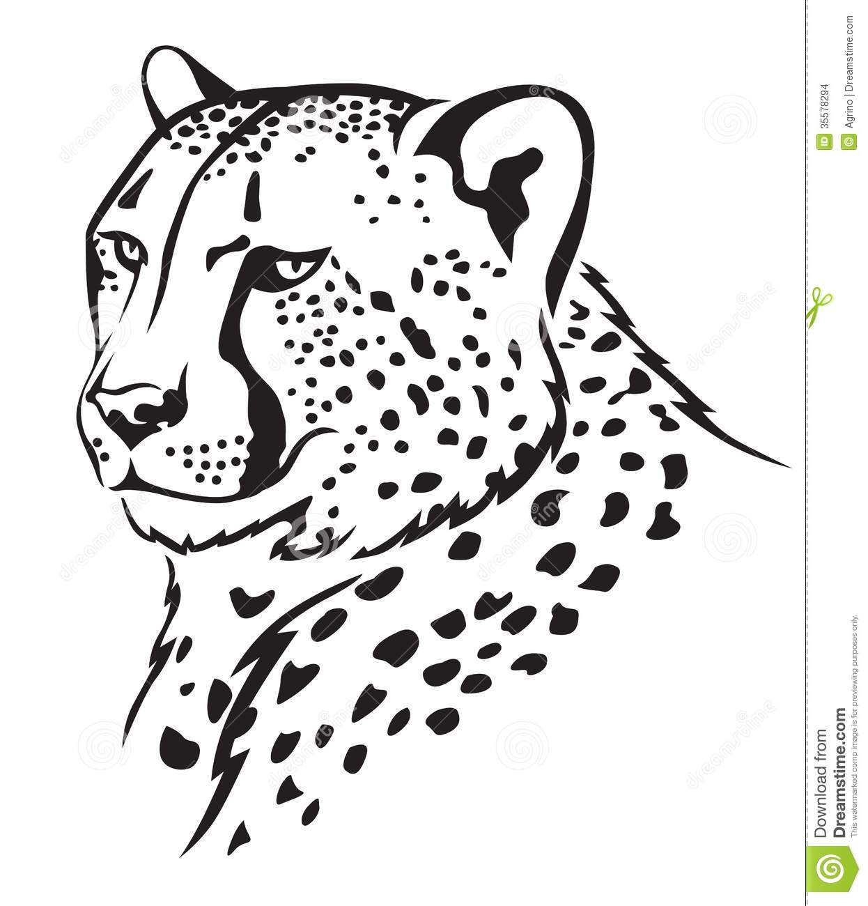 coloring pictures of cheetah gallery