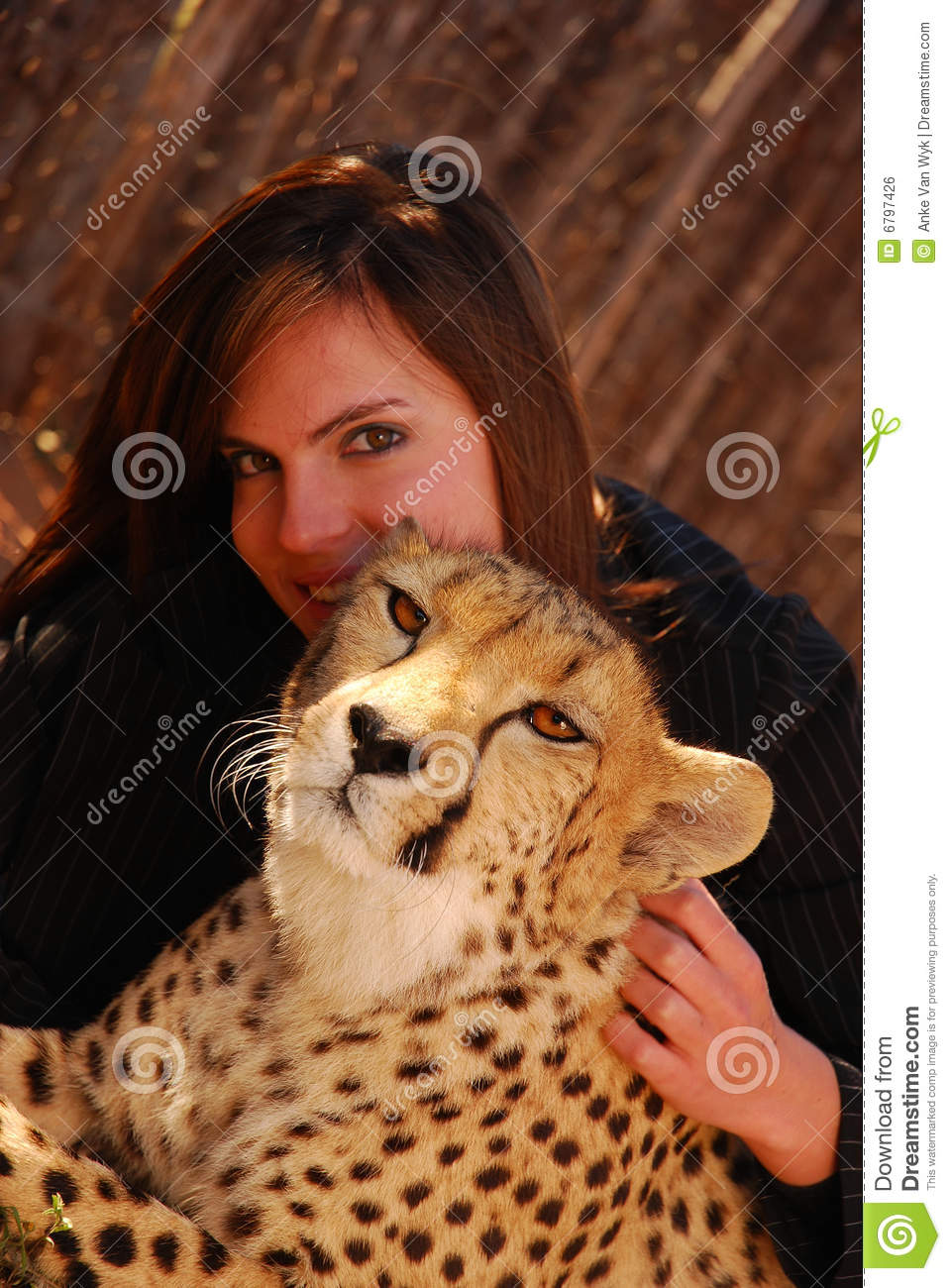 Person With Cat Head >> Cheetah Pet Royalty Free Stock Image - Image: 6797426