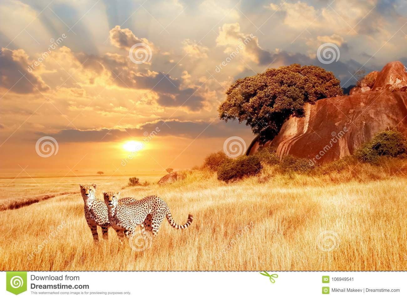 Cheetahs in the African savanna against the backdrop of beautiful sunset. Serengeti National Park. Tanzania. Africa