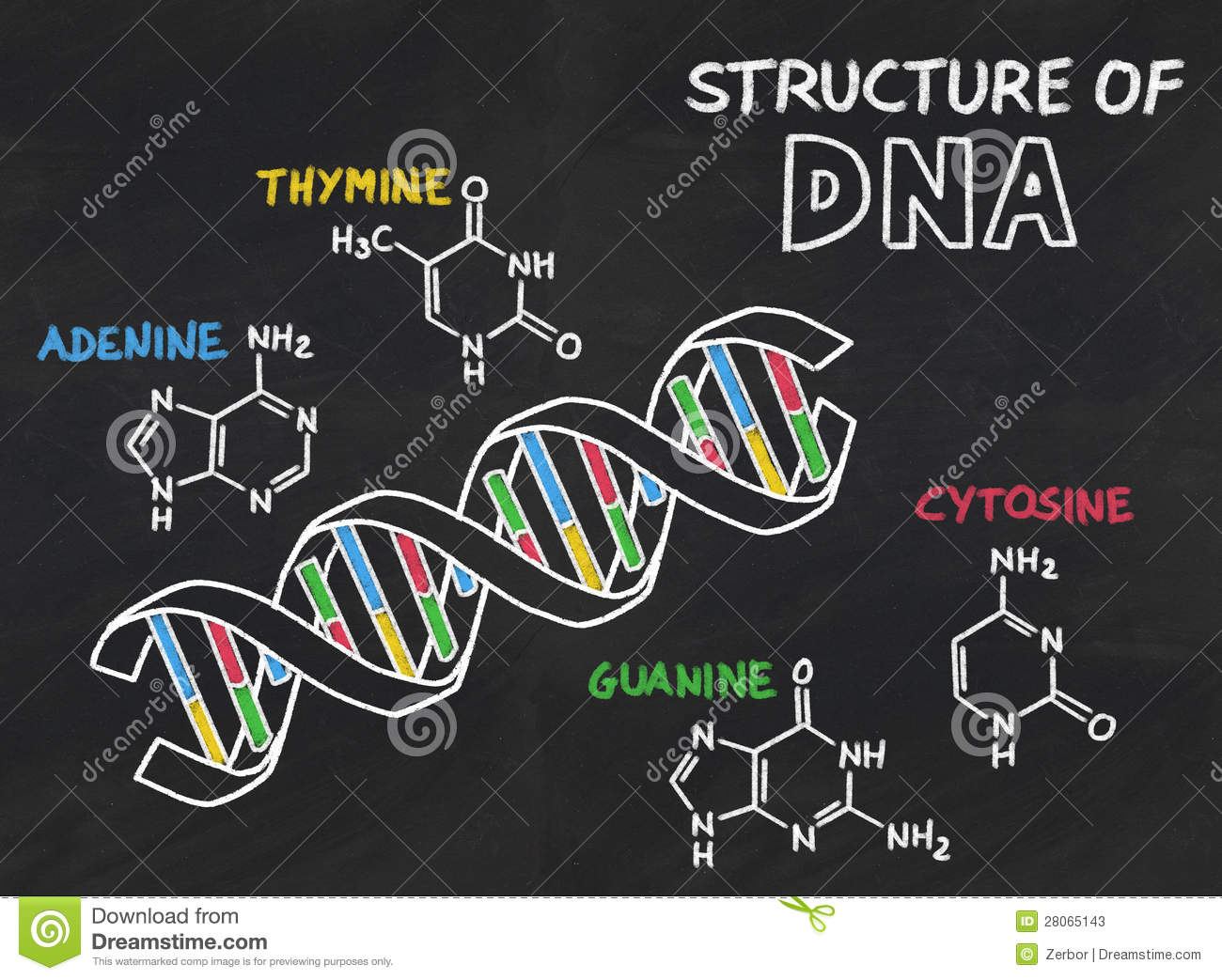 Image result for chemical structure of DNA images