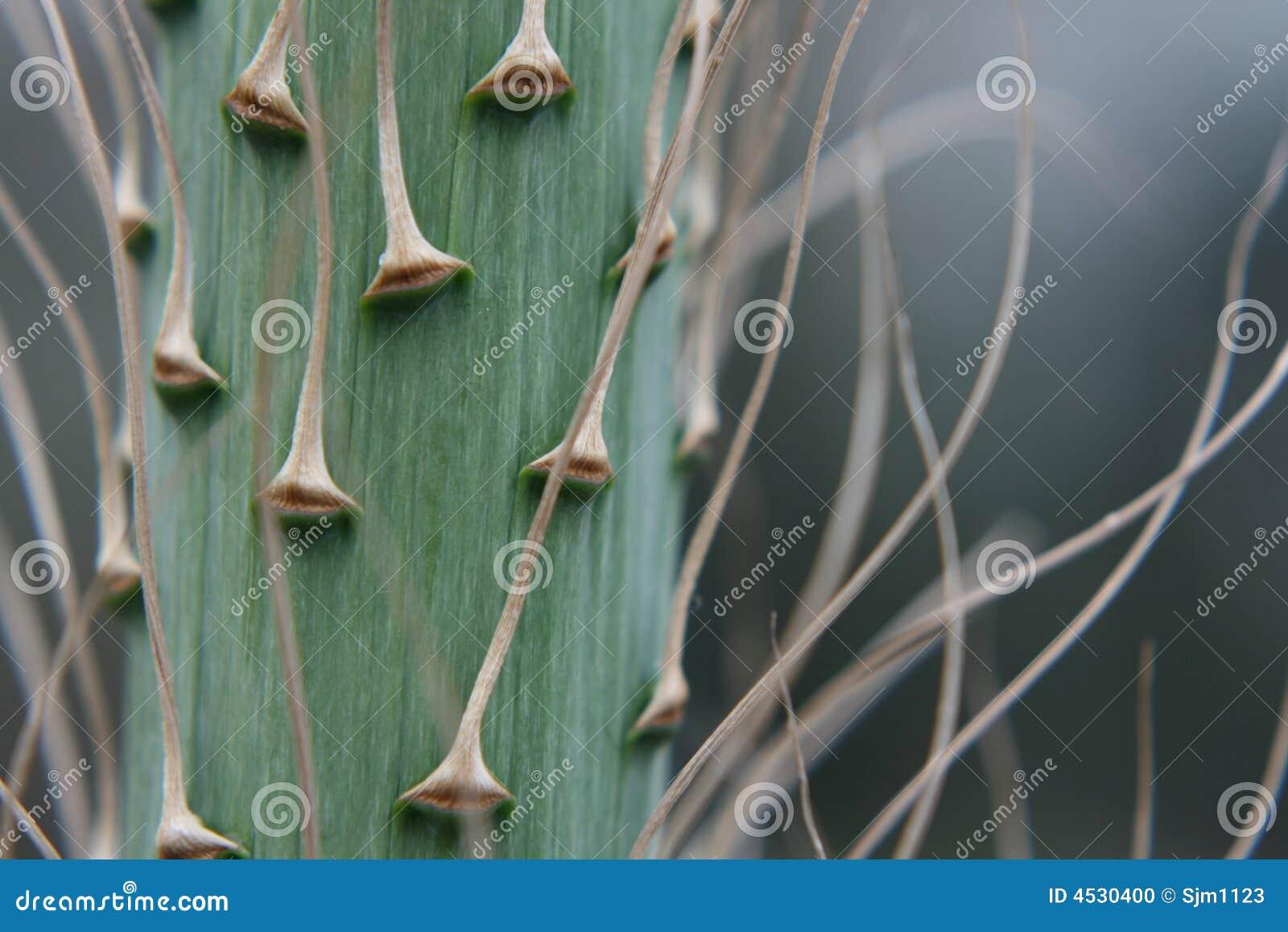 Cheminée de transitoire de fleur de yucca