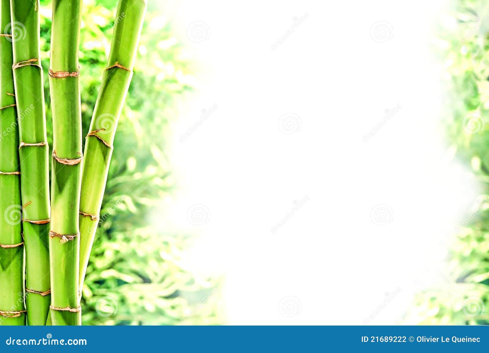 chemin es en bambou et herbe sauvage au dessus du fond blanc photo stock image du centrales. Black Bedroom Furniture Sets. Home Design Ideas