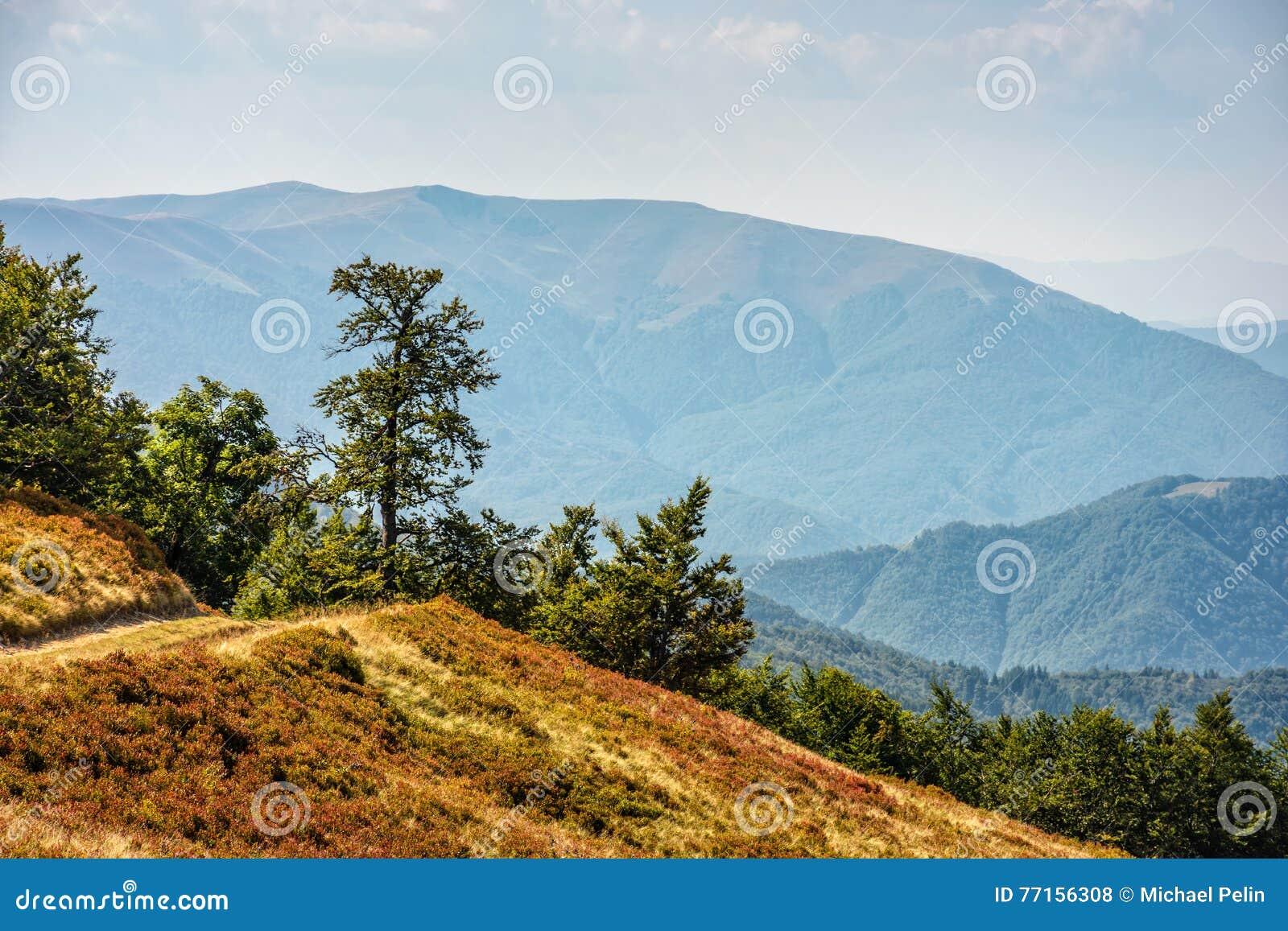 Chemin à travers le pré de côté de colline dans Carpathiens