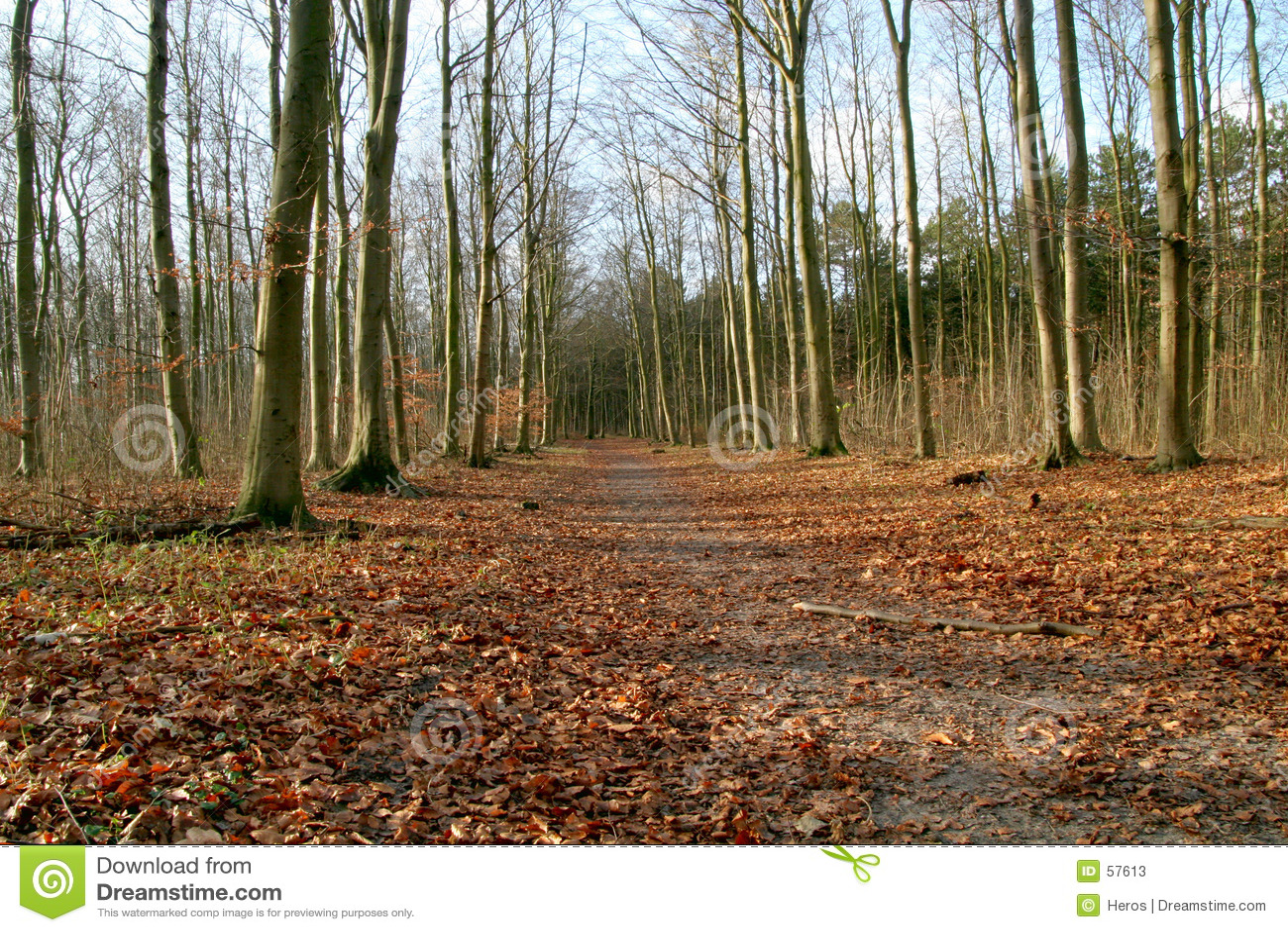 Chemin