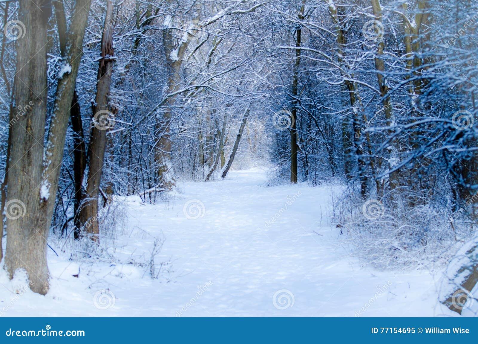 Chemin d hiver