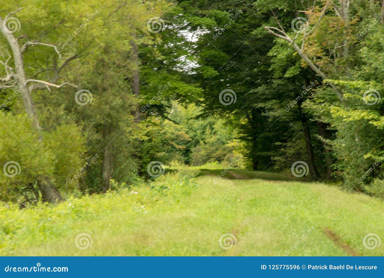 Chemin dans la forêt près du réservoir de Howard Eaton