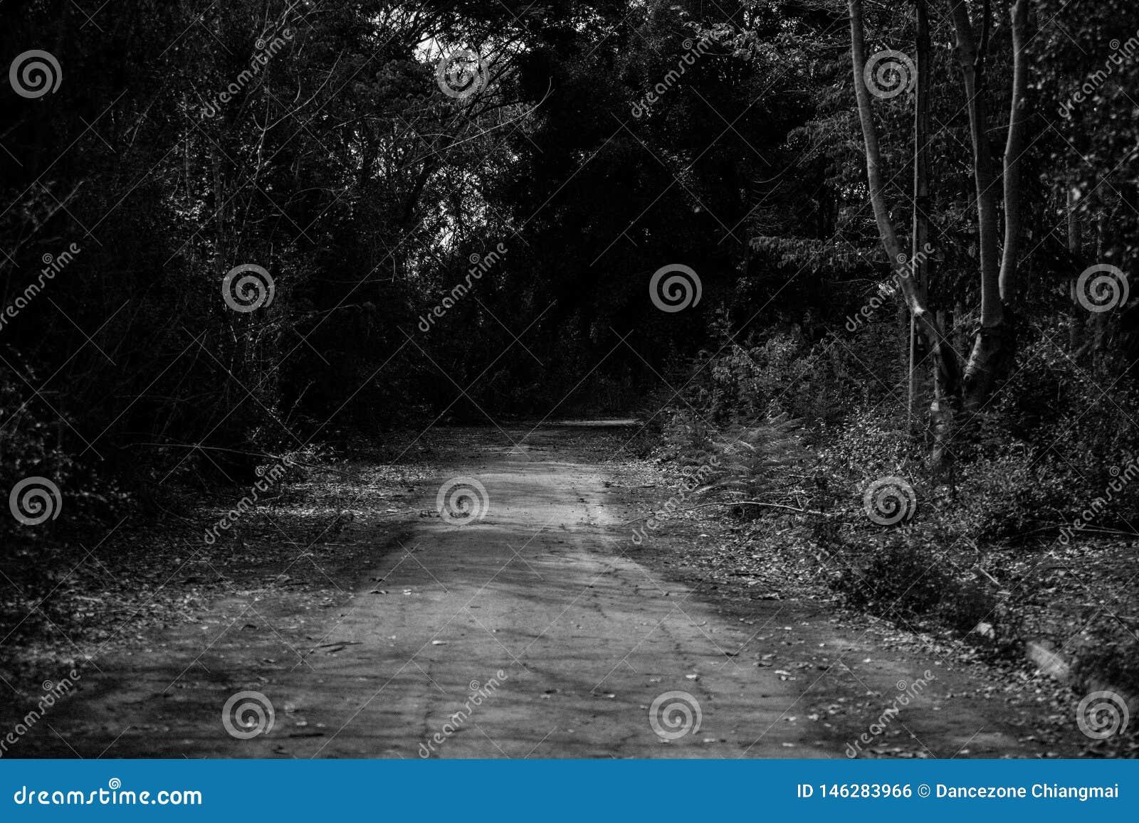 Chemin dans la grande forêt