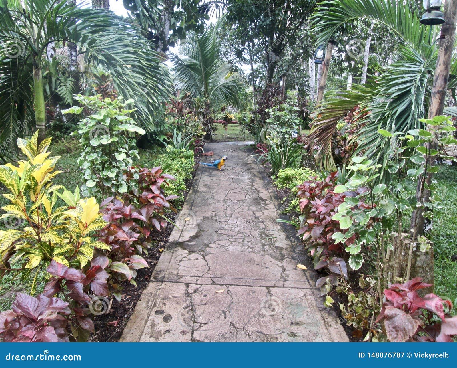 Chemin dans la jungle avec un perroquet