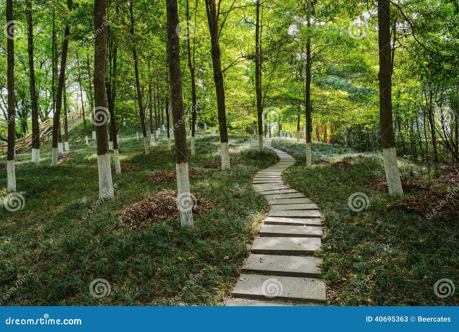 chemin de dalle en bois verdoyants image stock image du trottoir arbuste 40695363. Black Bedroom Furniture Sets. Home Design Ideas