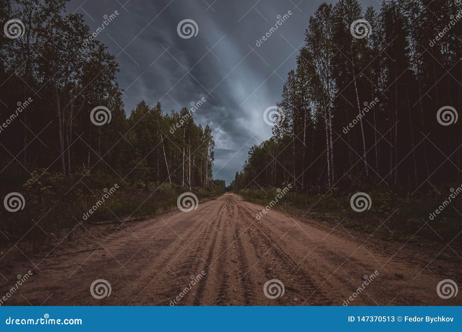 Chemin de terre dans les bois