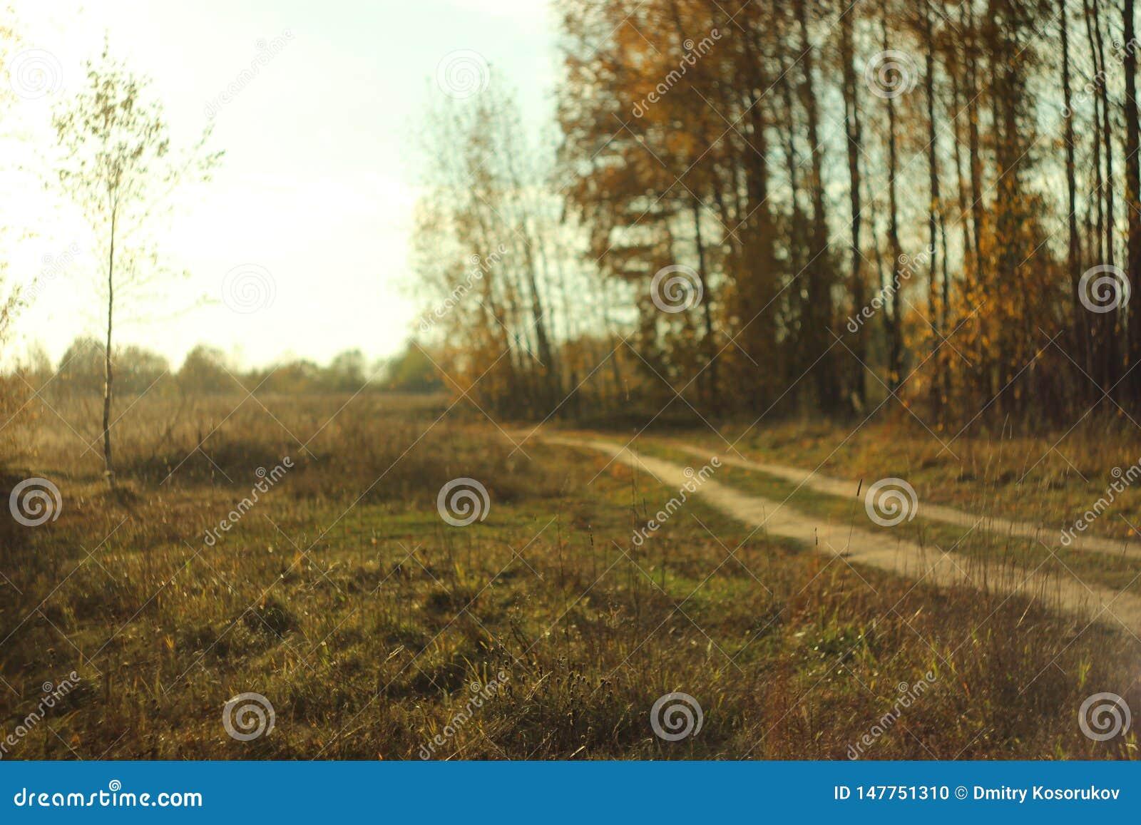 Chemin de terre de forêt un jour chaud