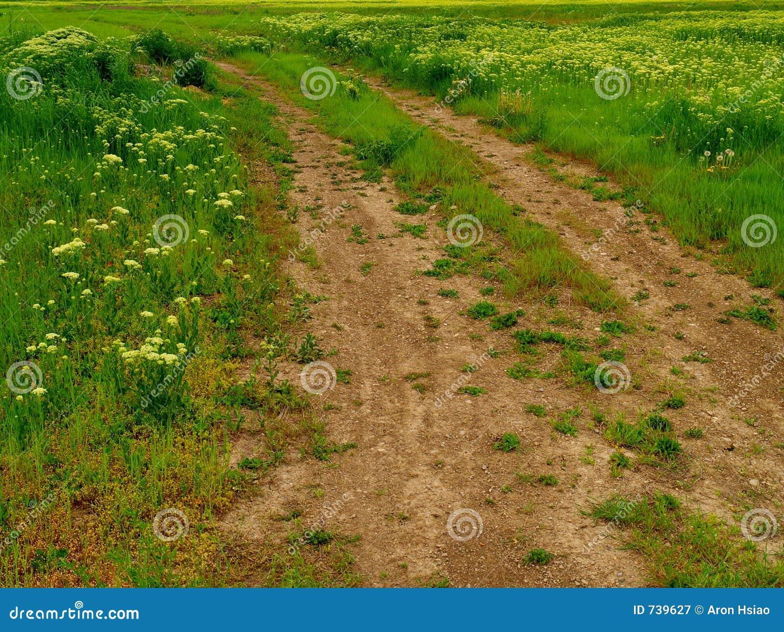 Chemin de terre ou chemin Ornière-rempli à travers le pré