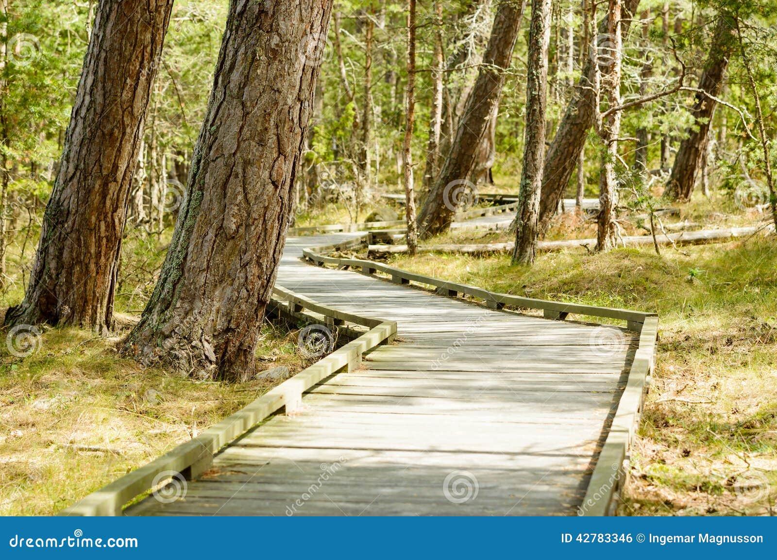 chemin en bois en nature photo stock image 42783346. Black Bedroom Furniture Sets. Home Design Ideas