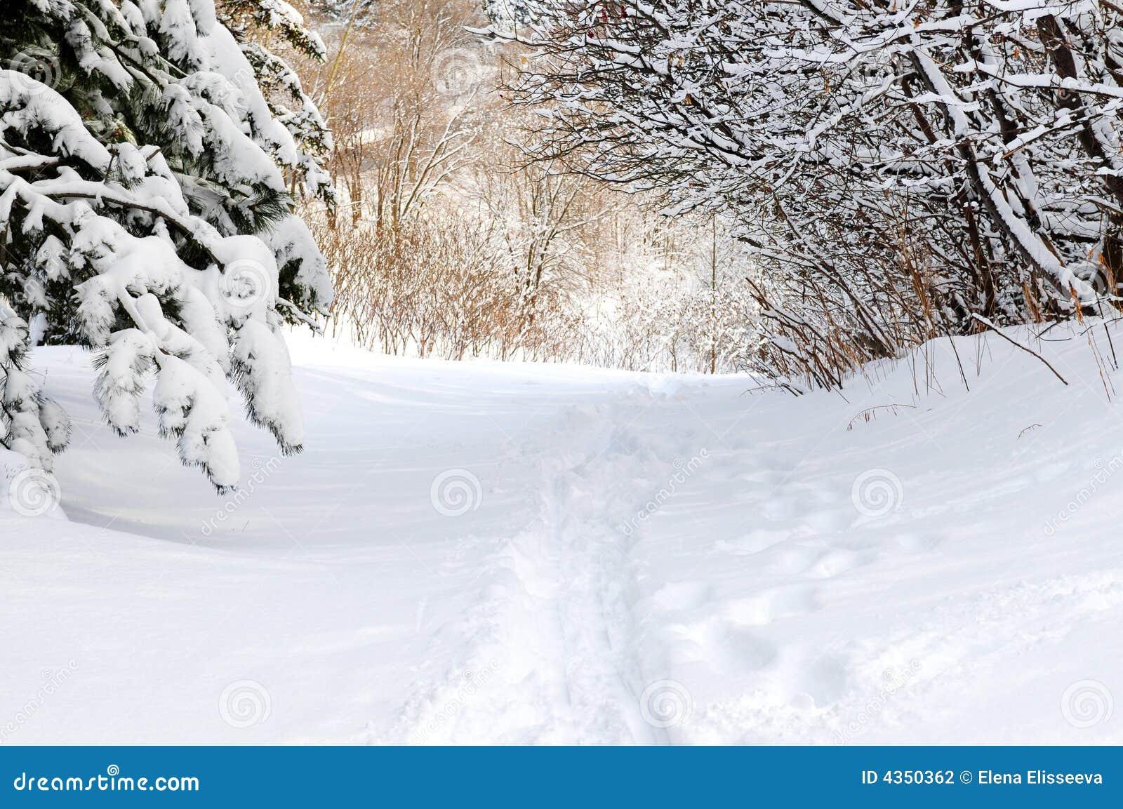 Chemin en forêt de l hiver