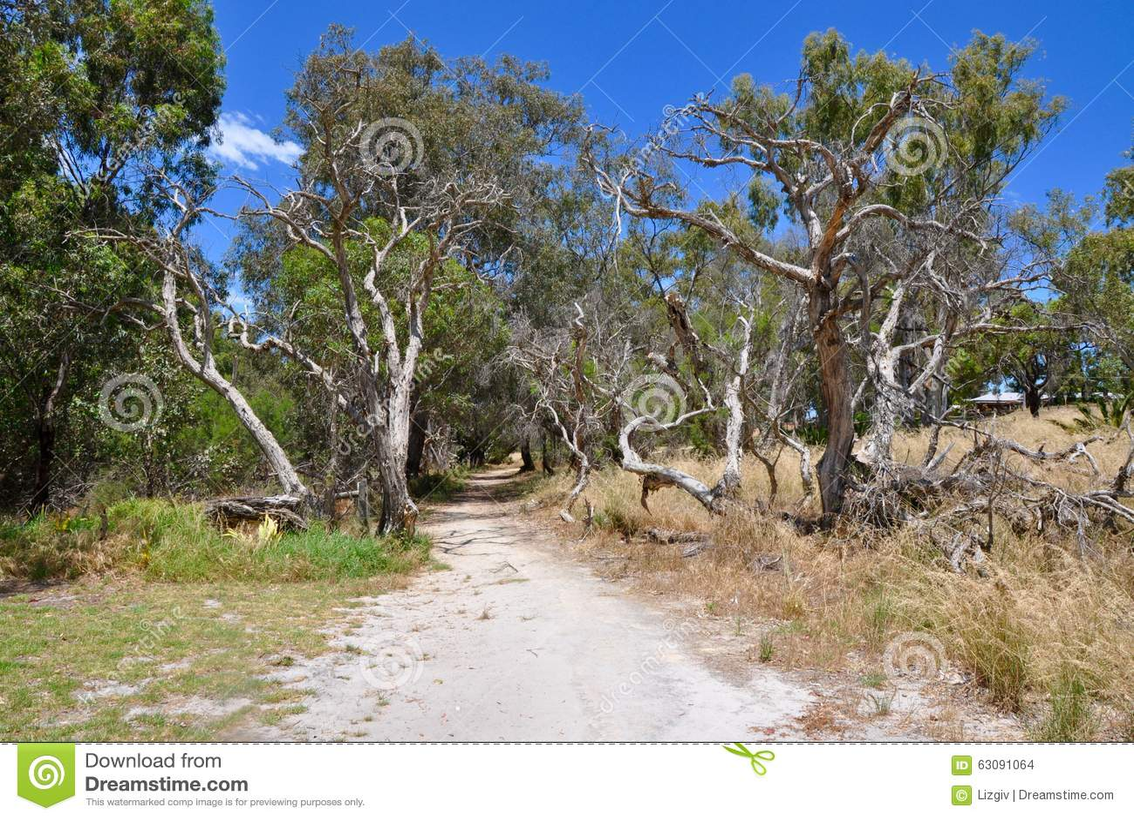 Download Chemin En Nature : Réservation De Marécage De Cockburn, Australie Occidentale Photo stock - Image du wispy, arénacé: 63091064