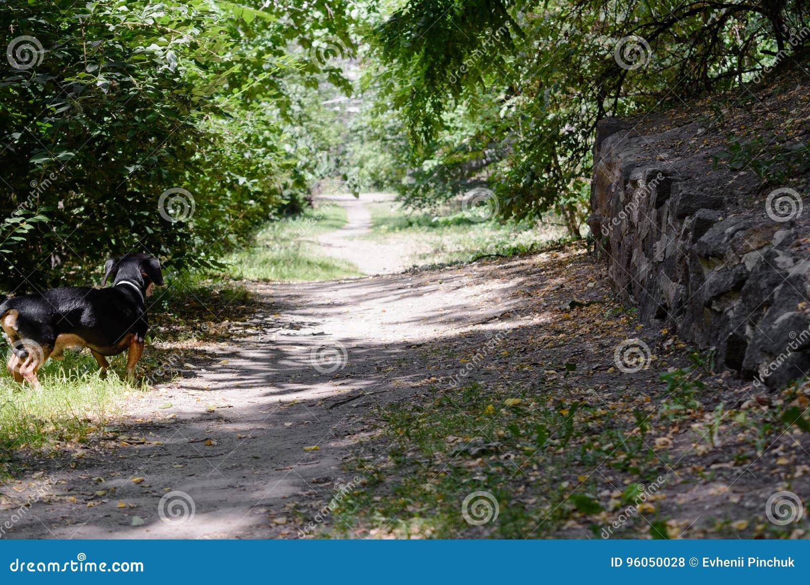 Chemin en parc en été avec le chien dans la ville