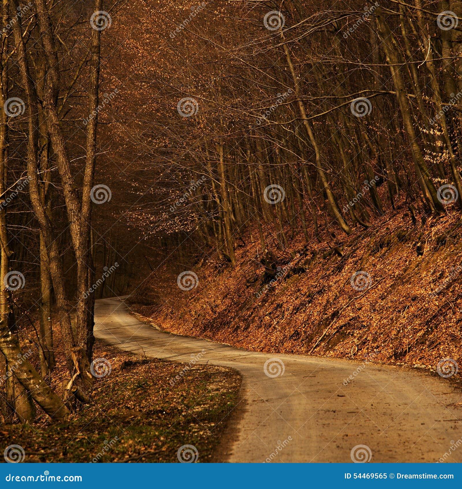 Chemin forestier aux valeurs maximales de concentration au poste de travail de KOH