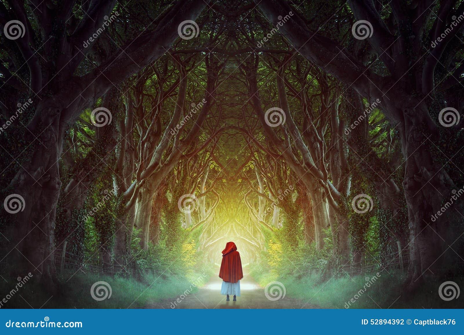 Chemin forestier foncé