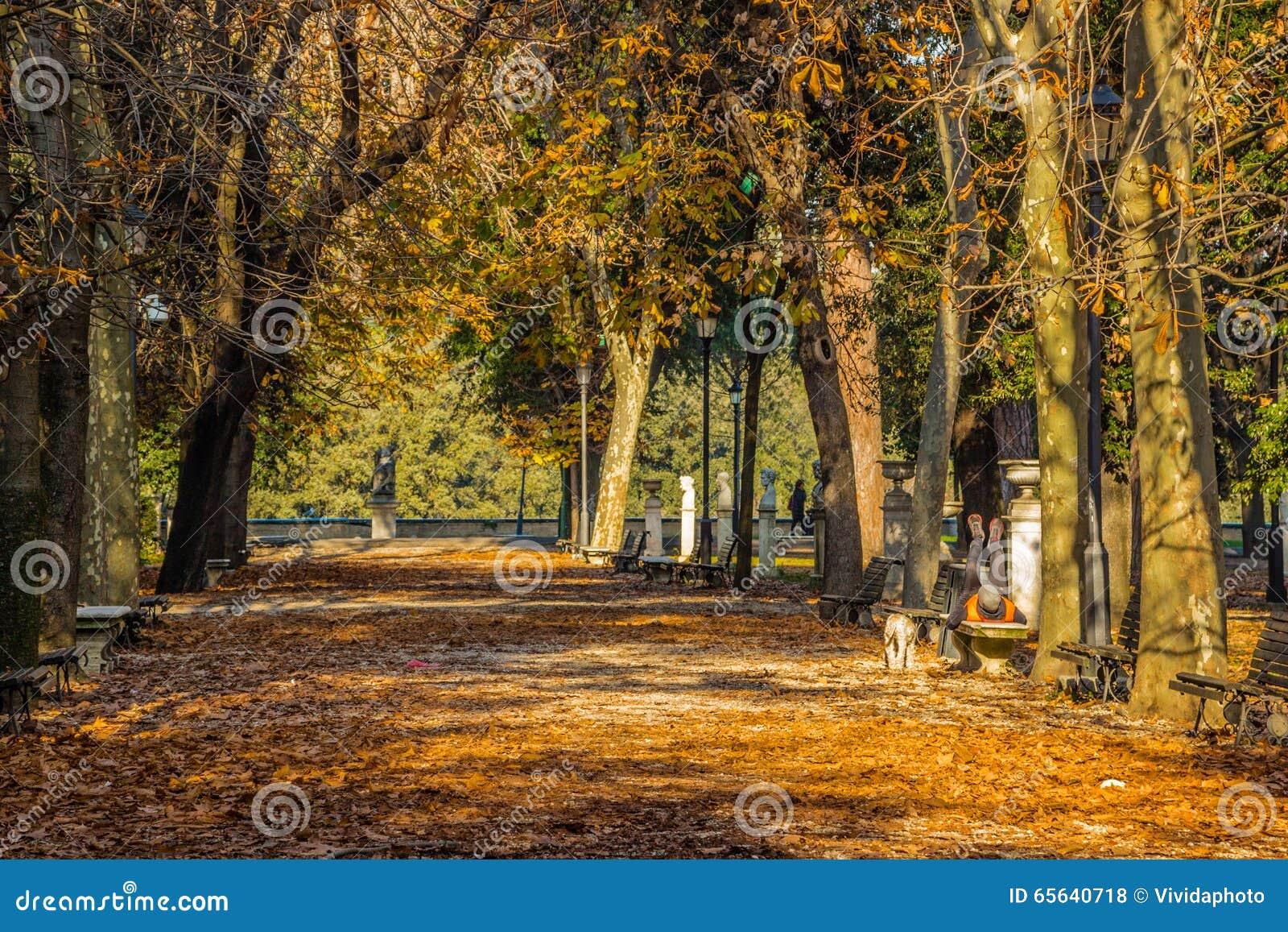 Chemin rugueux en parc de ville