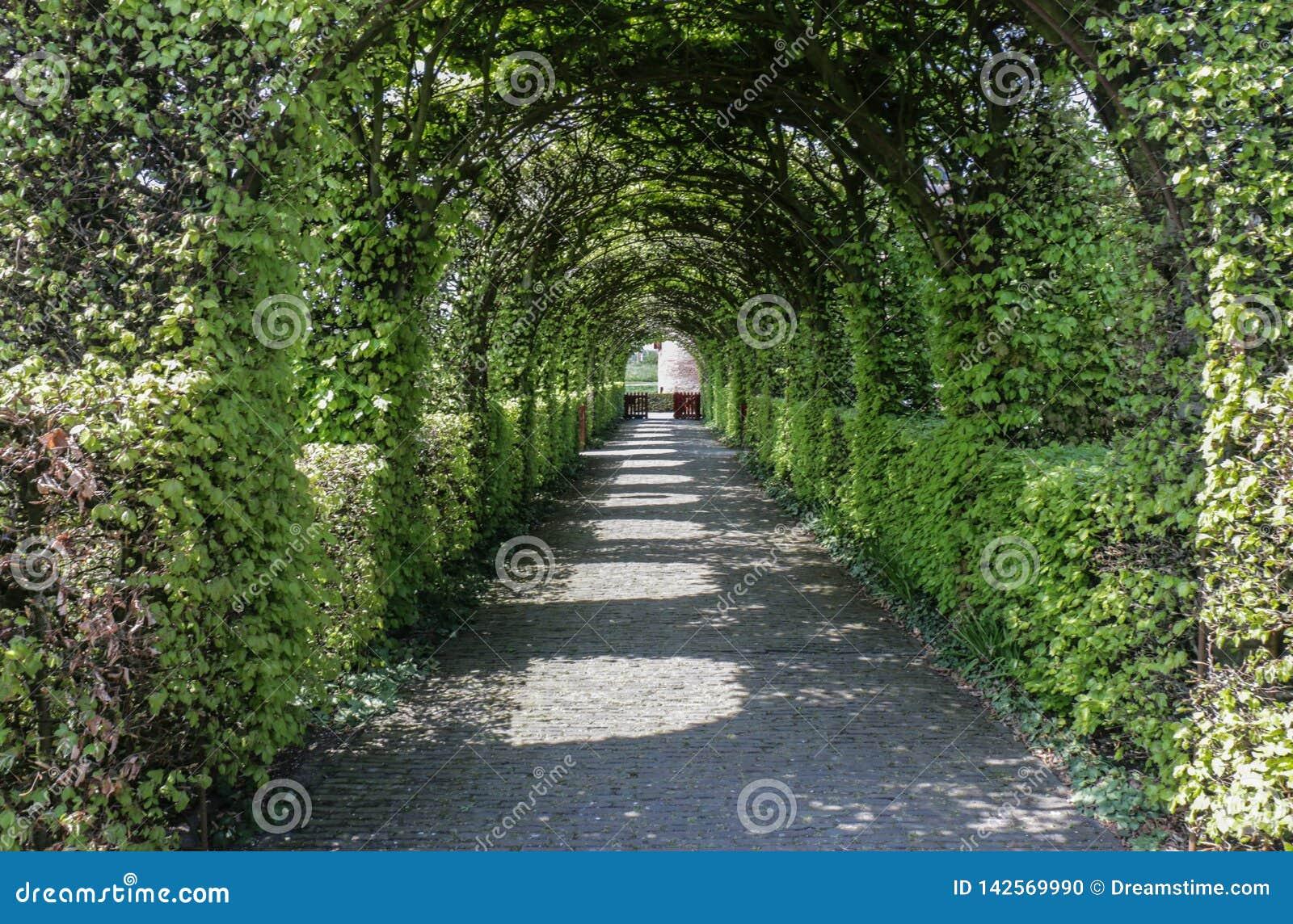 Chemin topiaire de voûte de jardin formel