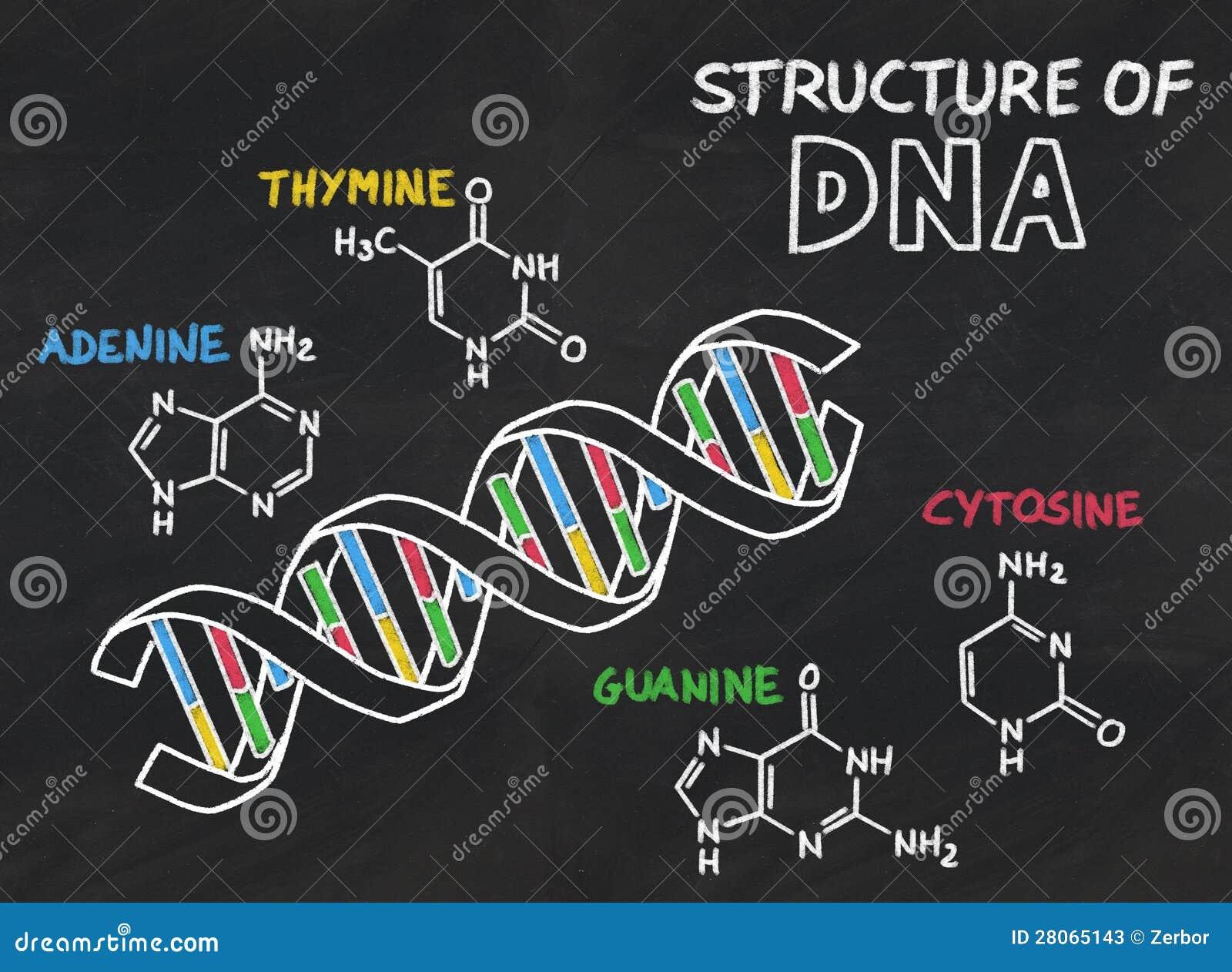 Chemische structuur van DNA op een bord