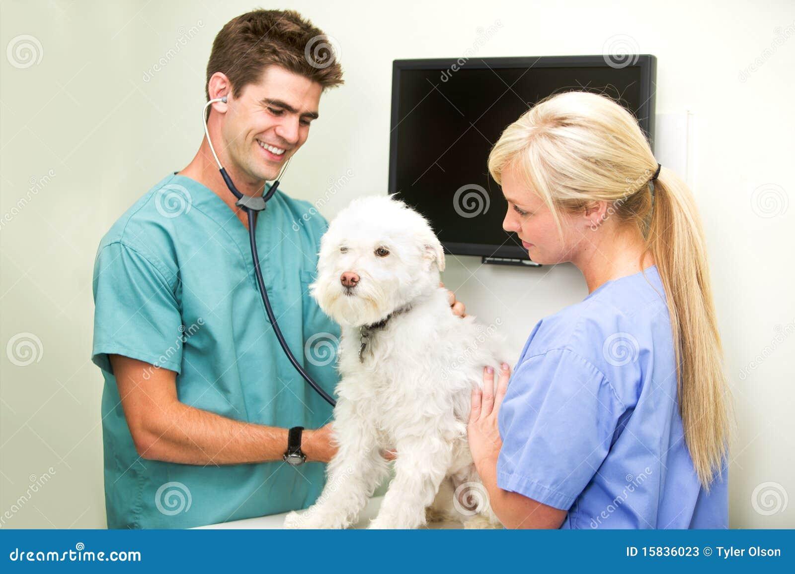 Chequeo del veterinario