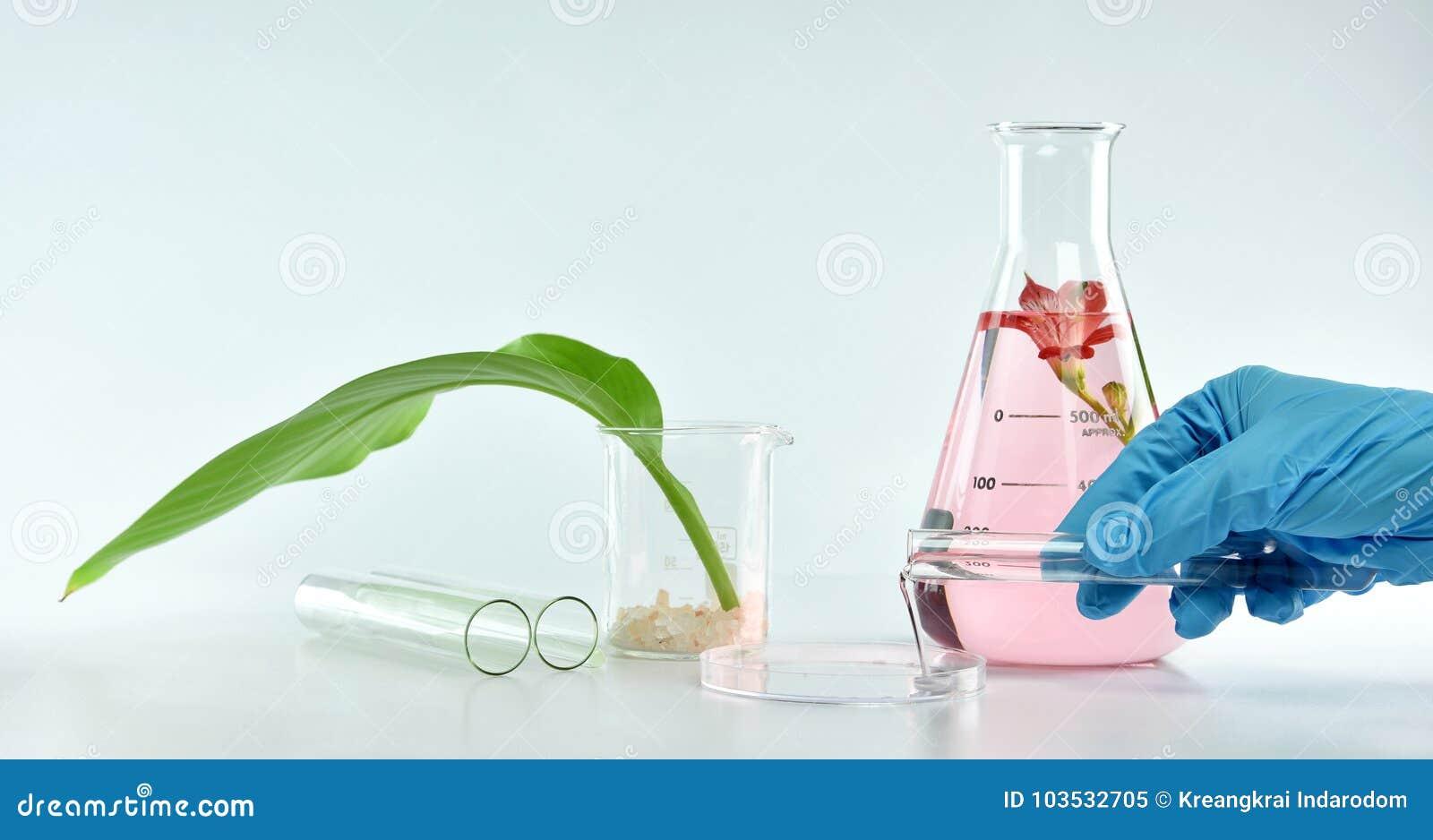 Chercheur mélangeant l extraction naturelle organique, cosmétiques de formulation de soins de la peau de pharmacien d essence d u